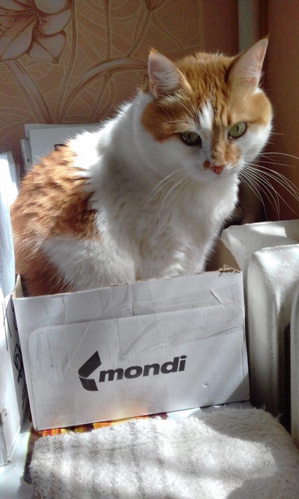 домашний питомец кот 4