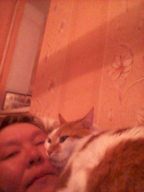 домашний питомец кот 7