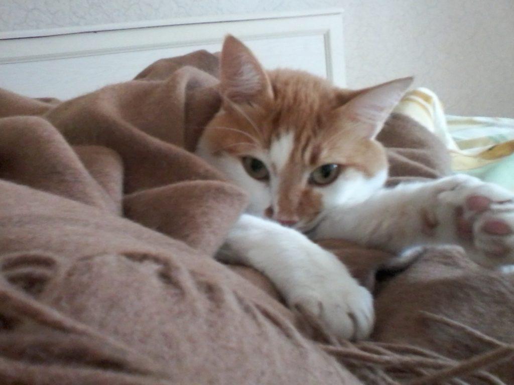 домашний питомец кот 8